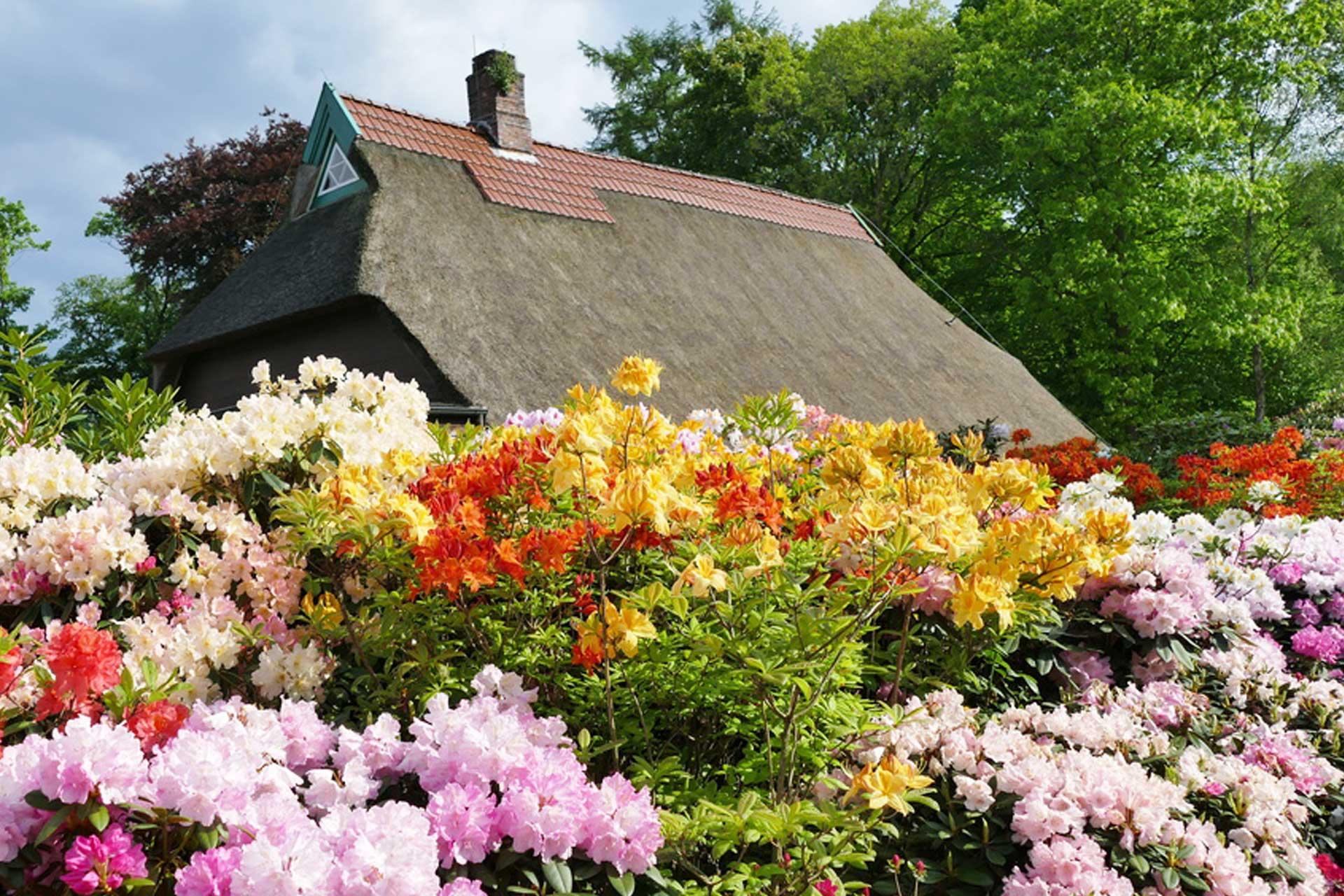 Reetdachhaus und Blumen im Ammerland
